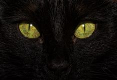Close-up image of a black cat`s eyes stock images
