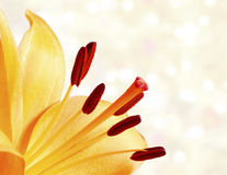 Close up image of bright orange lily Stock Photos