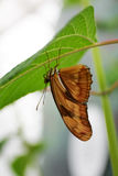 Close up image of a butterfly.  Royalty Free Stock Photography