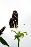 Close up image of a butterfly.  Stock Photo