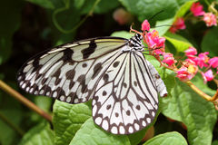 Close up image of a butterfly.  Royalty Free Stock Photos