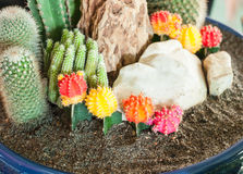 Close up image of cactus Stock Photos