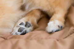 Close up image, detail of foot dog Stock Images
