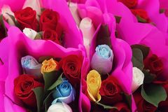 Colorful Bouquets of Roses, Wrapped in Magenta Paper. Close up image of display of multi colored rose bouquets, wrapped in magenta paper stock photography