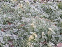 Close up image of early morning frost on a sunny day royalty free stock image