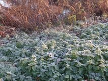 Close up image of early morning frost on a sunny day stock images