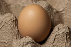 Top view of an egg in an egg tray. A close-up image of an egg in a cardboard egg tray shot from above Stock Image