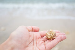 Close up image of female hand holding a seashell at the seaside Stock Image