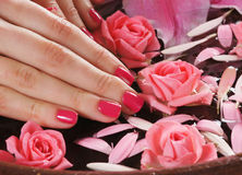 Close-up image of female hands, flowers and petals Stock Photos