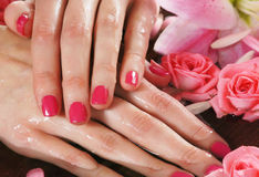 Close-up image of female hands holding roses Royalty Free Stock Photo