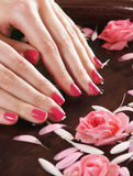 Close-up image of female hands holding roses Royalty Free Stock Images