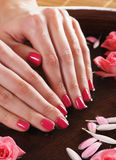 Close-up image of female hands holding roses Stock Image