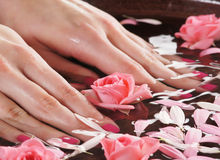 Close-up image of female hands holding roses Royalty Free Stock Image
