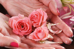 Close-up image of female hands holding roses Royalty Free Stock Photos