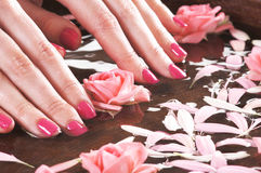 Close-up image of female nails and rose petals Royalty Free Stock Photo