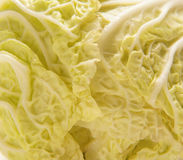A close-up image of a fresh Chinese cabbage Stock Image