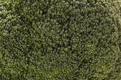 A close-up image of a fresh green cabbage Royalty Free Stock Image