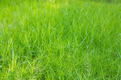 Close-up image of fresh spring green Royalty Free Stock Photo