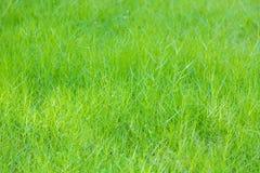 Close-up image of fresh spring green Stock Photos