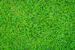 .Close-up image of fresh spring green grass Royalty Free Stock Photos