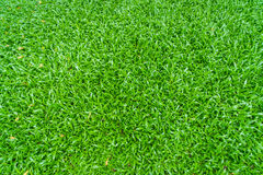 .Close-up image of fresh spring green grass Royalty Free Stock Photography