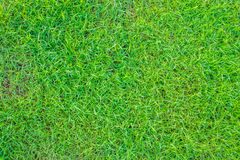 Close-up image of fresh spring green grass . Royalty Free Stock Photos