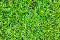 Close-up image of fresh spring green grass . Royalty Free Stock Photography