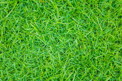 Close-up image of fresh spring green grass . Close-up image of fresh spring green grass Stock Images