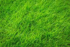 Close-up image of fresh spring green grass background Royalty Free Stock Image