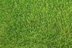 Close-up image of fresh spring green grass Stock Image