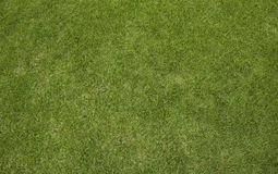 Close-up image of fresh spring green grass background Stock Photography