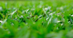 Close-up image of fresh spring green grass nature. Close-up image of fresh spring green grass royalty free stock image