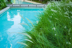 Close-up image of fresh spring green grass near swimming pool Royalty Free Stock Photo