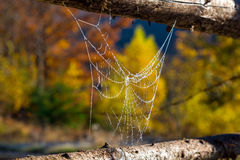 Close Up Image of Frozen by Morning Cold Spiderweb Stretched between traditional rural Fence Royalty Free Stock Photo