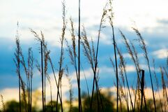 Close Up Image of Grass during Daytime Royalty Free Stock Photography