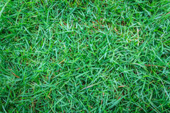 Close-up image of green grass.  Stock Images