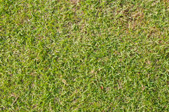 Close-up image of green grass background. Texture Stock Photos