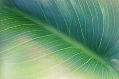 Close up image of green leaf pattern and detail Royalty Free Stock Photo