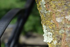 Green Lichen Growing on a Tree royalty free stock photography