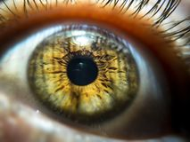 Close-up image of hazel colored pupil. macro eye veins and eyelashes royalty free stock photography