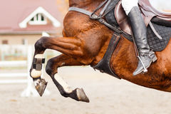 Close up image of jumping horse over hurdle. Bar on show jumping competition Stock Photo
