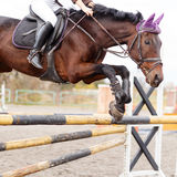 Close up image of jumping horse over hurdle. Bar on show jumping competition Royalty Free Stock Photography