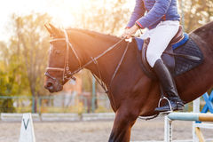 Close up image of jumping horse over hurdle. Bar on show jumping competition Royalty Free Stock Photos
