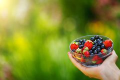 Close-up image of kid hands holding black currant and strawberry. Young girl holding fresh berries after harvest from garden.  Royalty Free Stock Photography