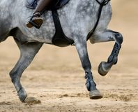 Close up image of legs of horse on show jumping competition. Stock Photo