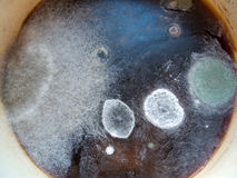Close-up image of a mold. Macro image of a mold in a pan Royalty Free Stock Photos