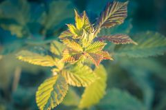 Close up image of new plant growth Royalty Free Stock Image