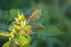Close up image of new plant growth Royalty Free Stock Photos
