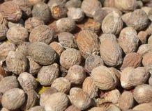 Close up image of nutmeg Royalty Free Stock Images