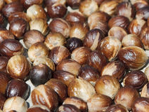 Close up image of nutmeg Stock Photo